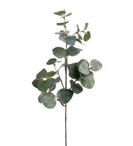 Bilde av  Eukalyptus med is 70 cm